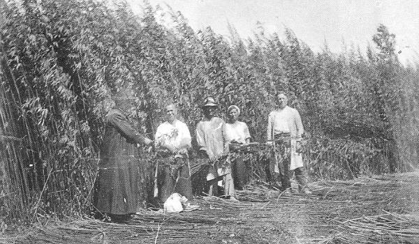 lavoratori_canapa_1910